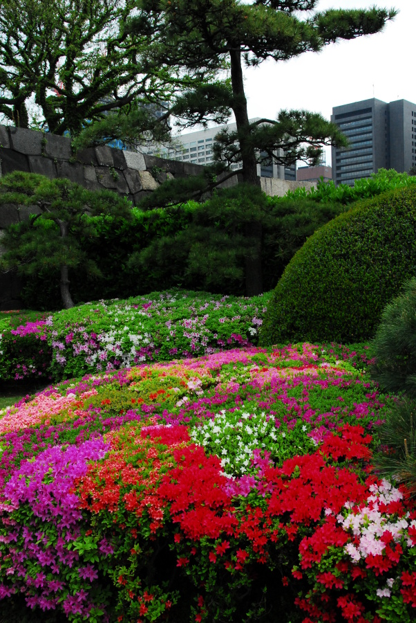 1525 - Imperial Palace Gardens Japan