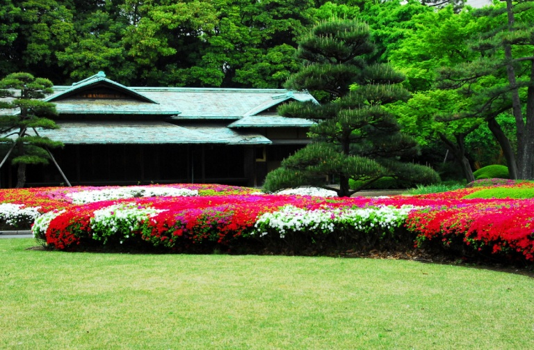 1529 - Imperial Palace Gardens Japan