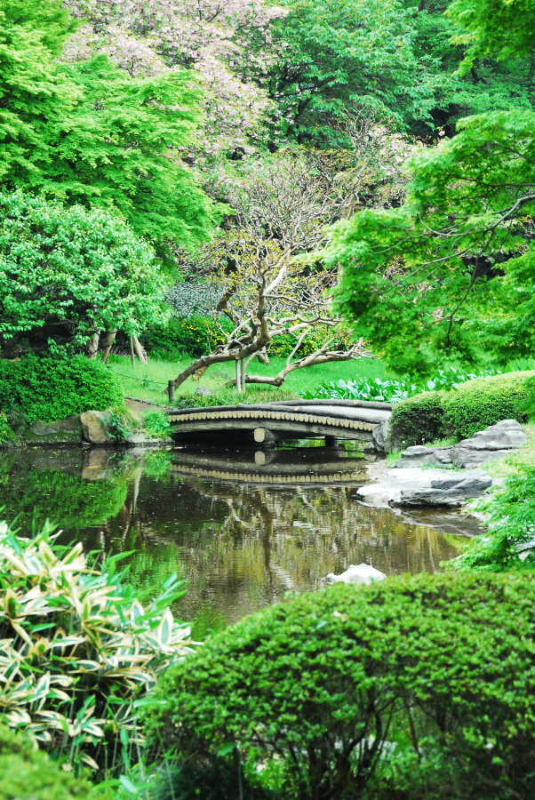1537 - Imperial Palace Gardens Japan