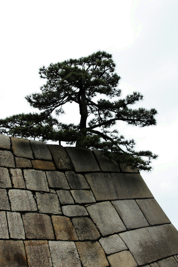 1543 - Imperial Palace Gardens Japan