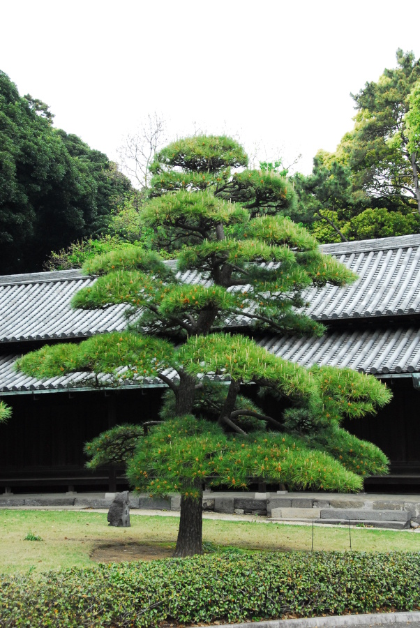 1544 - Imperial Palace Gardens Japan