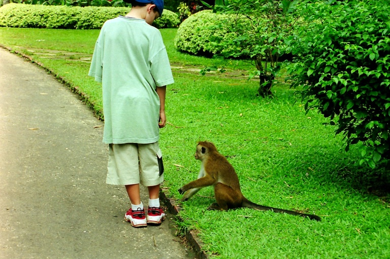 172 - Monkey's in Kandy