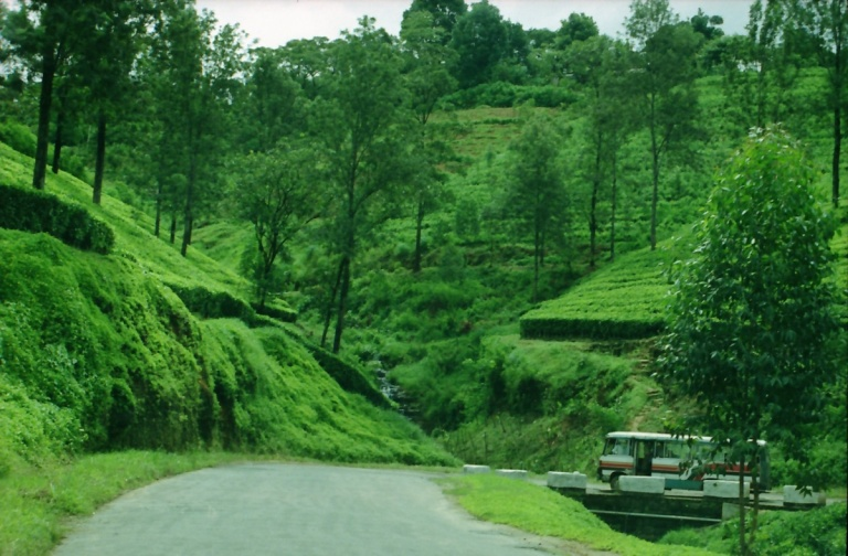190 - Road to Nuwara-Eliya