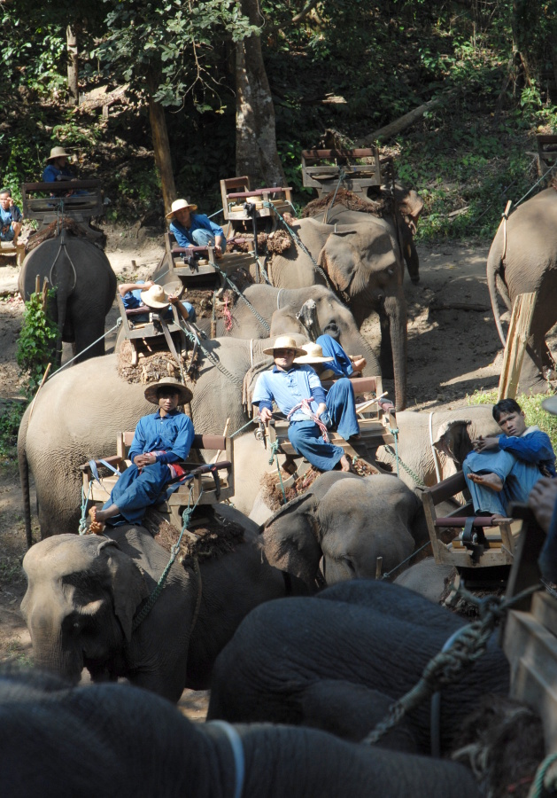 T307 - Elephant trek Chaing Dao