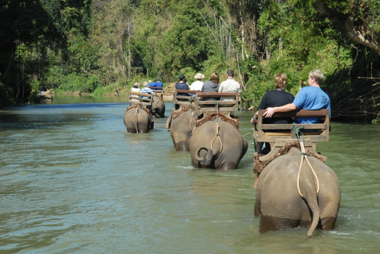 T310 - Elephant trek Chaing Dao