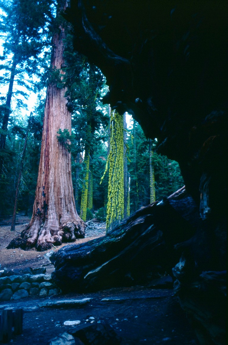 21-4  Redwood forest California