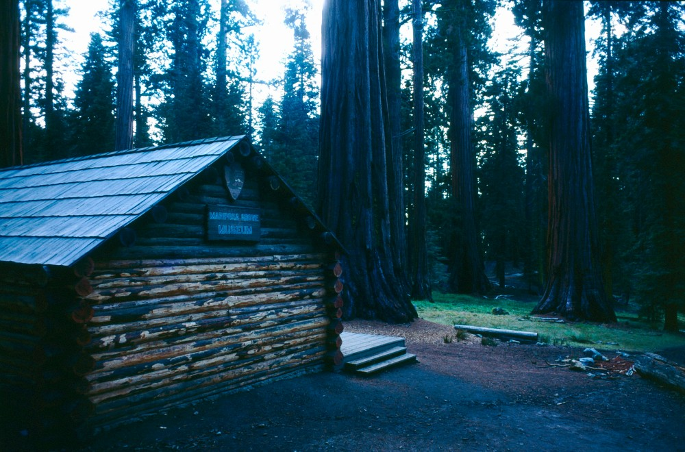21-6  Redwood forest California