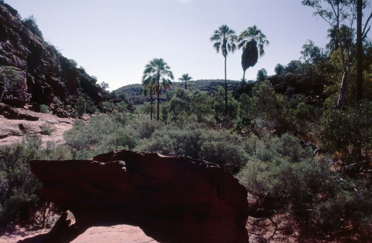 104-palm-canyon-northern-territory