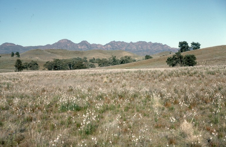 16-flinders-ranges