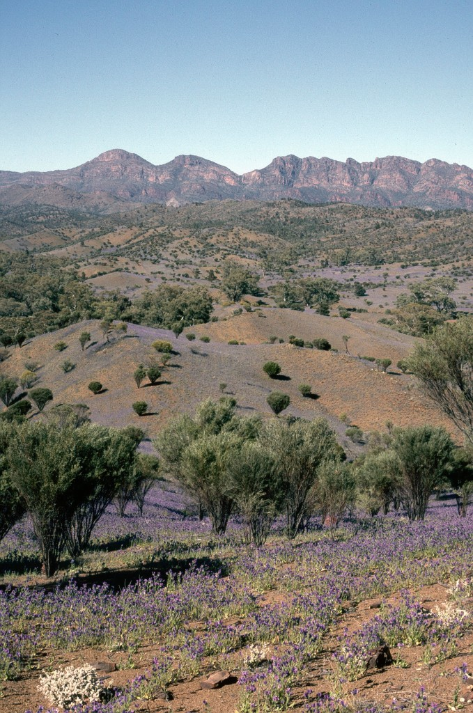 17-flinders-ranges