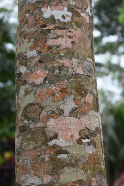 Wonders of bark