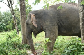 Elephant sanctuary - Phuket