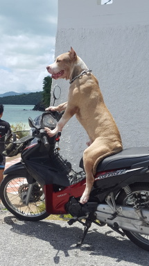 Even the dogs ride motorcycles