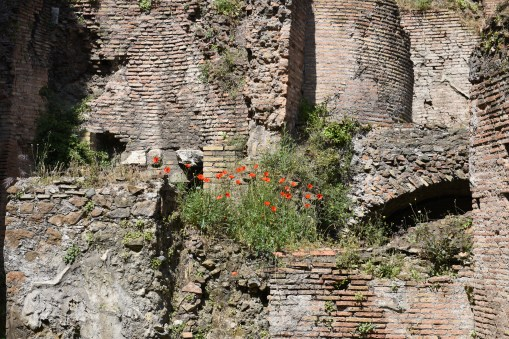 Flowers of the forum